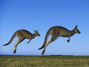 Zello push-to-talk: faster than a hopping kangaroo